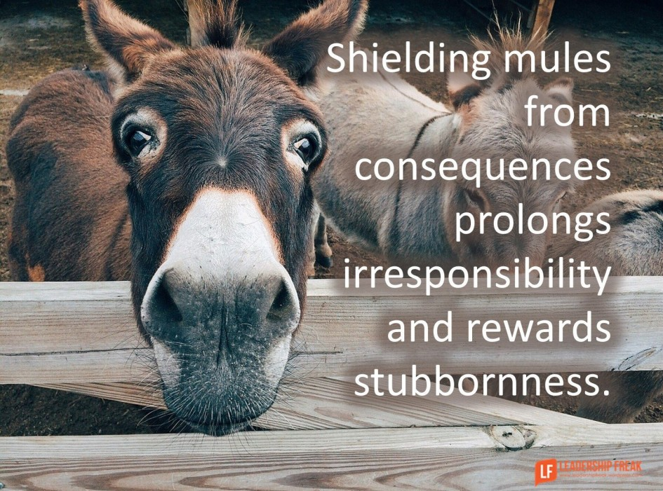 mules-and-leadership